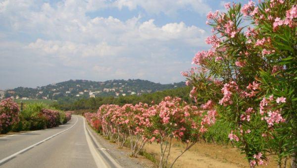 Прогулки в окрестностях Биота